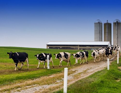 Six Sigma in the Dairy Industry