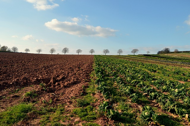 continuous improvement agriculture